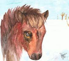 Icelandic Horse by wolfgryph
