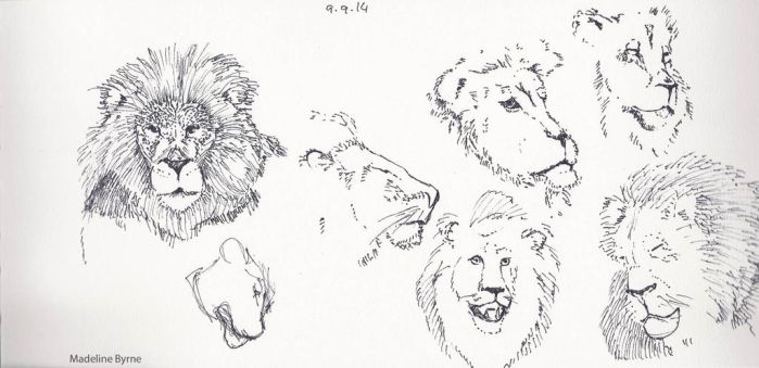 Lions by madelinebyrne