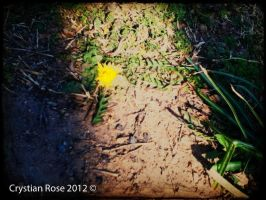 Shadow line Yellow flower by cryas