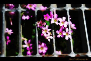 Flower4 by iso-50