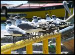 Stand up Seagulls by zentenophotography