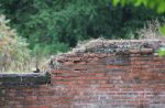 old wall by Irie-Stock