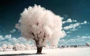 White Trees Part IV by myINQI