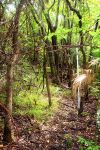 Deep in the Thicket by Bluegalleon