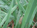Grass with Water 1 by LizzDurr121