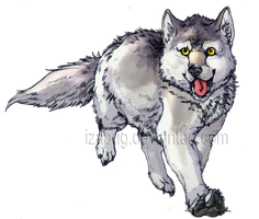 Grey Wolf by IzaPug