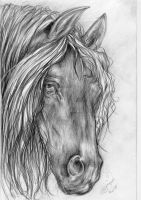 Horse Drawing 1 - Sleepy Eyes by BlackAngel-Diana
