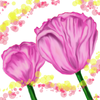 PINK TULIPS by December012