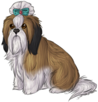 shih tzu cal face by BabyWolverines
