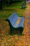 Autumn ..73.. by my-shots