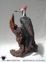 02 Pileated Woodpecker _Back by BlackHoleInAJar