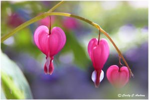 Bleeding Hearts by CecilyAndreuArtwork