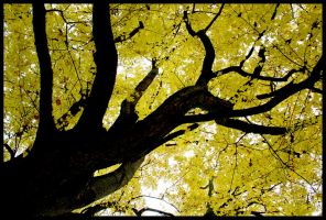 Tree while fall by Chris350D