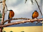 2 birds on a branch by dootless