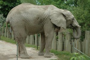 Stock- Elephant by Cleonor