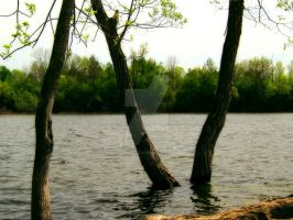Water Trees by SEnigmaticX