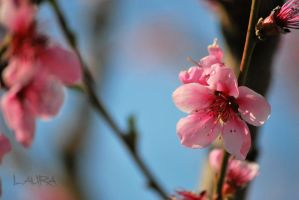 spring touch by Lk-Photography