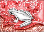 Grey Dotted Frog by Dana-Ulama