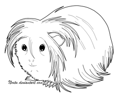 Guinea Pig Lineart by Noxtu