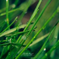 After rain by xTive