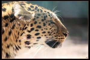 Leopard 10 by Globaludodesign