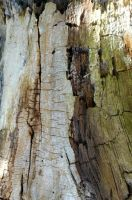 Stock Texture - Rotten Wood IV by rockgem