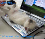 lolcats:mouse by soryaseroth