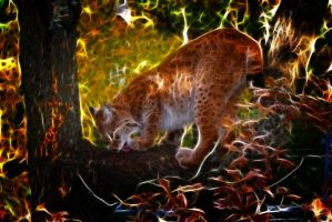 Lynx Fractal Edit by Hemamm
