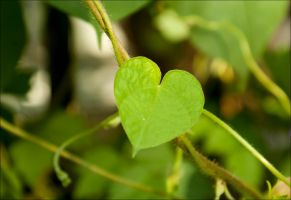 nature loves you 2 by Kanashii-Hito