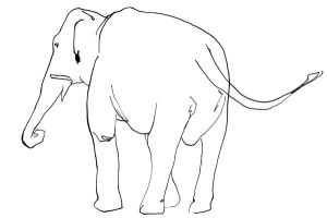 Elephant Line Drawing by TomHenderson