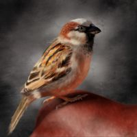Portrait of a sparrow by doormouse1960