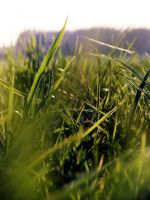 grass. by Casiula