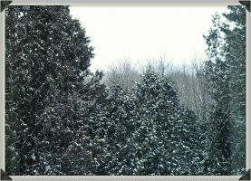 Snow Covered Trees by Seriridescence