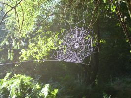 Spider Web by mark1624