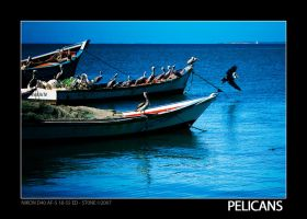 Pelicans by stonemx