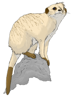 Layla the Meerkat - Realistic by 3933911