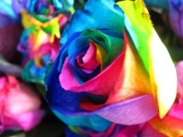 Roses in Technicolor ii by J-M-P-16