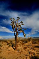Joshua Tree by Hobgoblin666