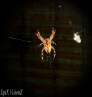 Spencer the Orb Spider by EpiXVisiOnZ