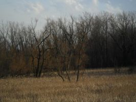 Lake Trail (winter) Marsh 7 by TornPageDyedRed