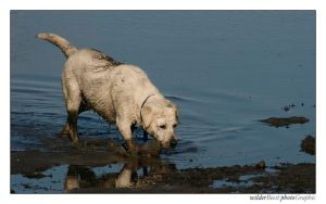 Wet and Muddy by wilderBeest