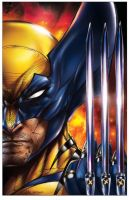 Wolverine by jamietyndall