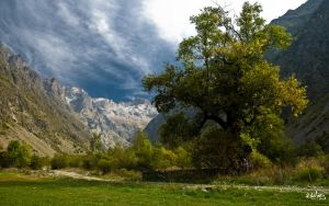 a tree in moutain by rdalpes
