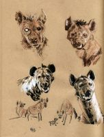 Hyena sketches pg 2 by AmandaMyers