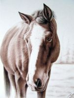 Brown Horse by ArtsandDogs