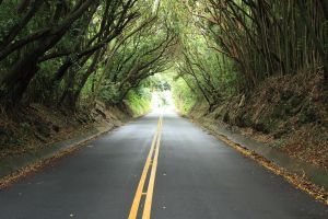 Wooded tunnel by Omegacetacean
