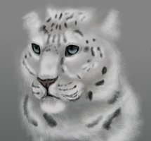 quick realism fur practice by xPine
