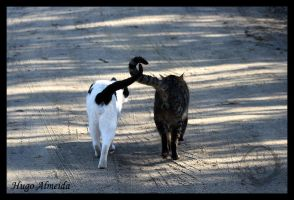 Animals - Good friends by HAphotography