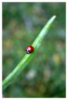 Ladybird by drinkpoison