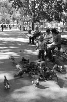 Pigeon Social In the Park 8 by Miss-Tbones